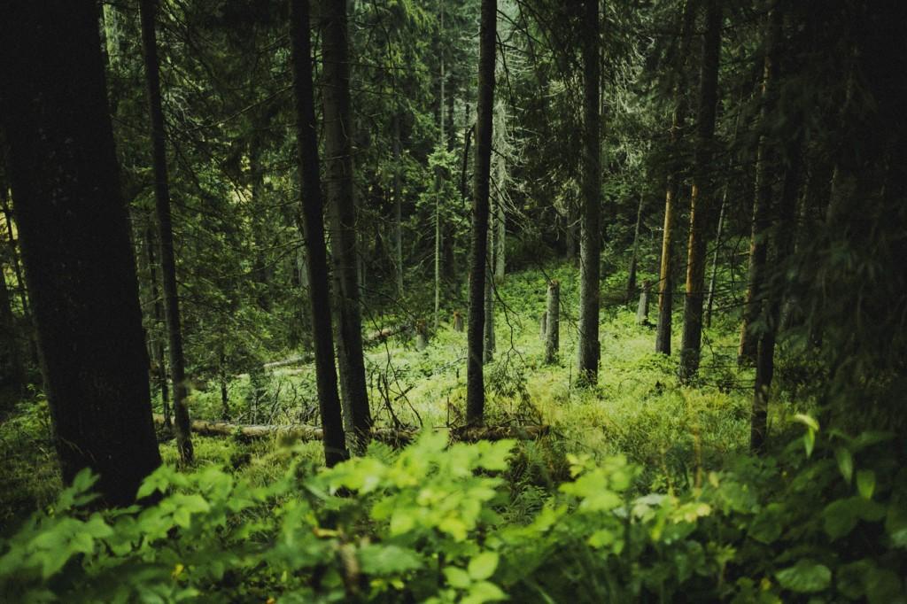 Dolina5Stawów_054737