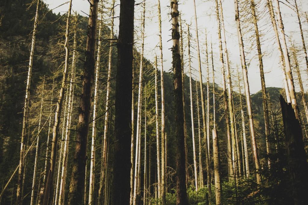 Dolina5Stawów_072035